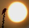 esselt: (птичка и солнце)