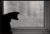 esselt: (котенок у окна)