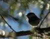 esselt: (bird)