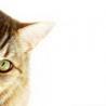 esselt: (кошачий глаз)