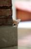 esselt: (котеночек)