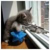 yarol_2075: (Kitten with Attitude)