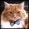 tangotabby: (bow tie, Schrodinger, TARDIS)