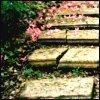 fayte: (fleur - steps)