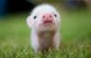 newyuzhanin: (piglet)