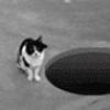 swoolfs: (cat)