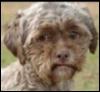 seminarist: (Укоризненная собака)