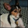 miashell: (doggy, tyson)