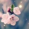 red_frog: (весна)