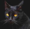 luchecon: (кот)