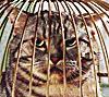 luchecon: (кот в клетке)