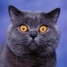 luchecon: (удивленный кот)