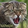 luchecon: (сердит)