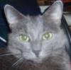 tutellia: (кот Эшлей)