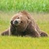 anitka2000: (bear)