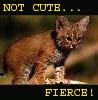 museclio: (not cute)