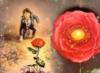 soleilpirate: (Rose)