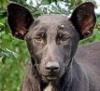 cucanero: (dogface)