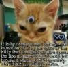 liliboo: spice kitteh (pic#11207641)
