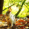 bunnykissd: (Fall)