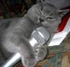 vrochek: (karaoke)
