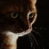 marycatelli: (Cat)