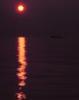 marycatelli: (sunset)