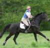 goddessfarmer: (gallop)