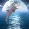 fenix_c: (dolphin)