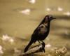 red_kaili: (Angry birdie)