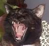 juldea: (roar!!!)