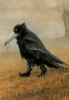 crows_roost: (ZOOM)