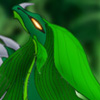 stellarwind: (Ivy Dragon)