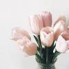 nirso: (tulips)
