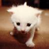 geeveecatullus: (kitty)