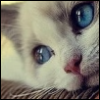 dashariga: (blue eyes)