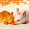 brabbel123: (little bunnies)
