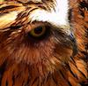 skington: (owl) (Default)