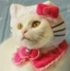 faithellen: (Sad Kitty)