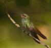kender_risha: just a little bird (bird)