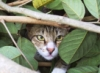 kender_risha: (cat hiding)