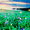 thefirstcaro: (flowers 01)