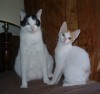 aberdeen: (Cats)