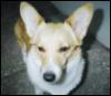 usedtobeljs: (Small Blonde Dog of Irritation)