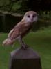 rabinovin: (t owl)