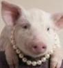 klangtao: (porco)