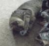 sparkletindi: (toy, neko, kitty)