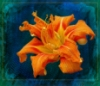 acmespaceship: (Daylily)