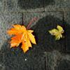 082008_032017: (2_leaves)