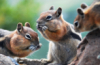 twentysquirrels: ()